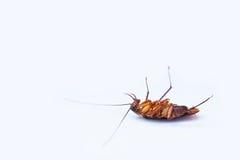 kackerlackor royaltyfri fotografi