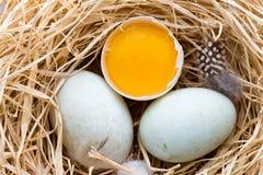 Kaczek jajek gniazdeczko, wiosna Wielkanocny symbol Zdjęcia Royalty Free