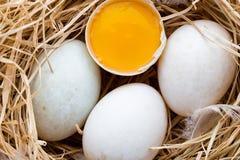 Kaczek jajek gniazdeczko, wiosny wielkanocy symbol Zdjęcia Royalty Free