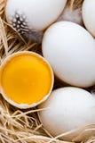 Kaczek jajek gniazdeczko, wiosny wielkanocy symbol Obraz Royalty Free