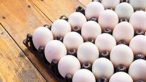 Kaczek jajka Fotografia Royalty Free