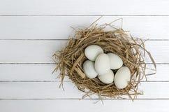 Kaczek jajka Zdjęcia Stock