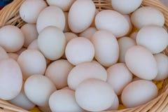 Kaczek jajka Zdjęcie Stock