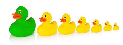 kaczek kaczki następuje przywódców linii prowadzi czerwony gumowego żółty Zdjęcia Stock