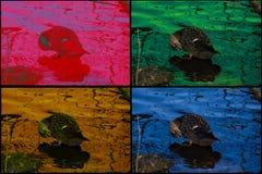 Kaczka kręgli głowa, błękitne wody Fotografia Stock