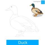 Kaczka ptak uczy się rysować wektor Obrazy Stock