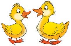 kaczki ilustracji