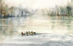 Kaczki ilustracja wektor