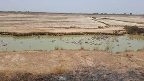 Kaczki dźwiganie w Kambodża Zdjęcie Stock