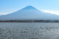 Kaczki dopłynięcie w Kawaguchiko jeziorze, Fuji góry tło Obrazy Royalty Free