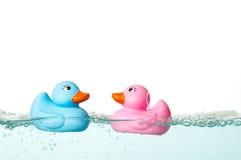 kaczki guma zdjęcie royalty free