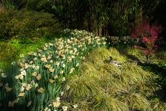 Kaczki i wiosny kwiaty Fotografia Stock
