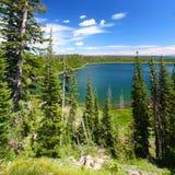 kaczki jezioro np Yellowstone Obrazy Royalty Free