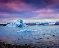 Kaczki między błękitnymi górami lodowa w Jokulsarlon gleczeru lagunie Obrazy Royalty Free
