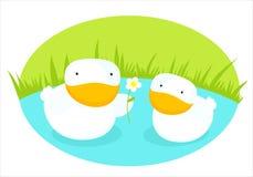 kaczki miłość ilustracji