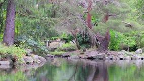 Kaczki na brzeg pod drzewami zbiory wideo