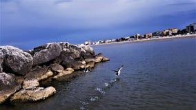 Kaczki na morzu Obrazy Royalty Free