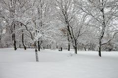Kaczki na zimy rzece obrazy royalty free
