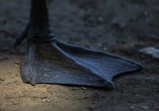 Kaczki nogi zbliżenie Błony zbliżenie zdjęcia stock
