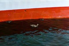 Kaczki pod statkiem zdjęcie stock