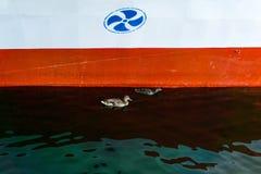 Kaczki pod statkiem obrazy royalty free