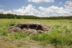 Kaczki stora zdjęcie stock