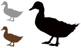 Kaczki sylwetka - nadwodny gospodarstwa rolnego lub przyrody ptak ilustracji