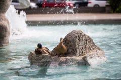 Kaczki w fontannie, neptun brunnen w Munich Obraz Royalty Free