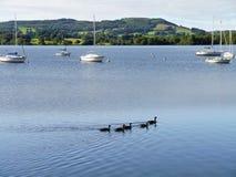 Kaczki z łodziami na jeziorze fotografia royalty free