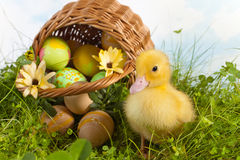 kaczątka Easter cukierki Zdjęcia Stock