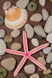 kadłub rozgwiazdy Zdjęcie Stock