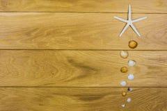 kadłub rozgwiazdy Obraz Royalty Free