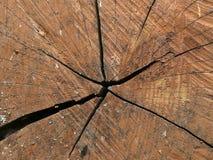Kadłubowa drzewna tekstura Zdjęcie Royalty Free