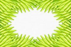 Kader dat van palmbladen wordt gemaakt royalty-vrije stock afbeeldingen