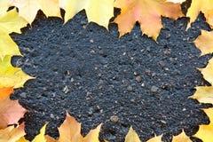Kader. De bladeren van de herfst op nat asfalt. Stock Foto's