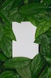 Kader en ruimte voor tekst met document kaart op groen blad Royalty-vrije Stock Foto