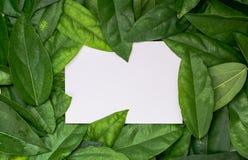 Kader en ruimte voor tekst met document kaart op groen blad Stock Foto