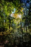 Kader gevuld bos in de herfst royalty-vrije stock fotografie