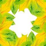 Kader, grens van de herfstbladeren op een witte achtergrond Stock Foto