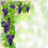 Kader met blauwe rijpe wijngaard stock illustratie