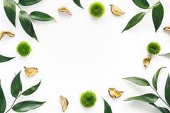 Kader met groene bladeren op witte achtergrond Stock Afbeeldingen