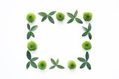 Kader met groene bladeren op witte achtergrond Royalty-vrije Stock Afbeeldingen