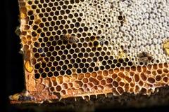 Kader met honing Stock Foto's