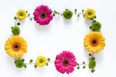 Kader met kleurrijke bloemen Stock Foto's