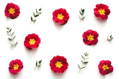 Kader met Rode Bloemen op Witte Achtergrond Stock Foto's