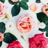 Kader met roze die rozen, takken, bladeren op wit worden geïsoleerd Royalty-vrije Stock Afbeelding