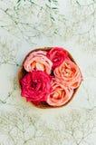 Kader met roze die rozen, takken, bladeren op witte backg worden geïsoleerd Stock Foto's