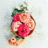 Kader met roze die rozen, takken, bladeren op witte backg worden geïsoleerd Royalty-vrije Stock Foto's