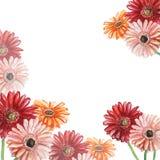 Kader met roze, rode en oranje gerberas De illustratie van de waterverf stock illustratie