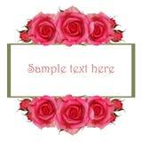 Kader met roze roze bloemen Royalty-vrije Stock Foto's